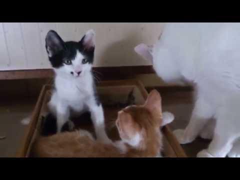 子猫と兄ちゃん Part 2(2016.06.28)
