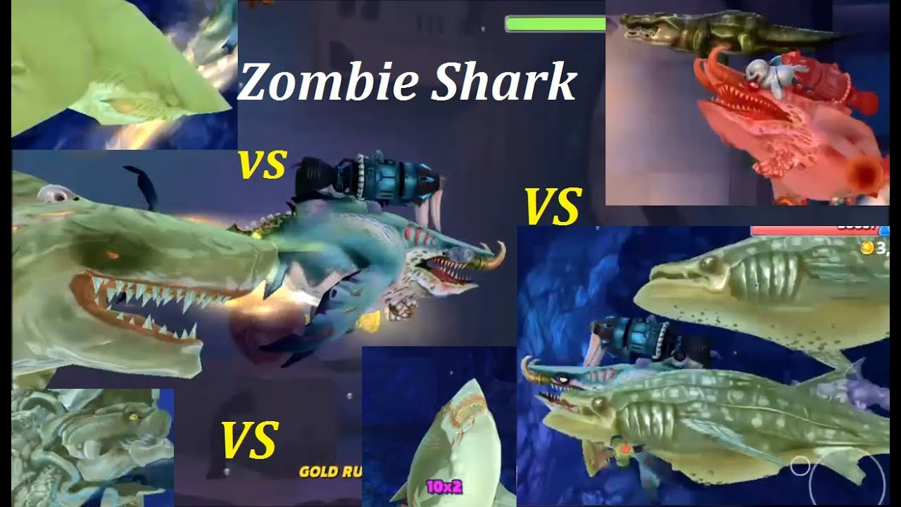 SharkSidercom  Learn All About Sharks amp Shark