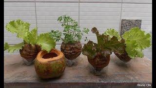Grow Plants in Coconuts | Organic pot DIY Garden  | Eco-friendly DIY Project