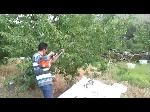 Meyve Toplama Makinası Kızılcık (Hasat Silkeleme Silkme)