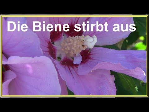 Blumen In Porzellantassen Pflanzen Deko Tipp Fur Garten Und Balkon