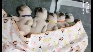 Funny and Cute CAT / DOG Compilation (Puppies/Kittens videos)