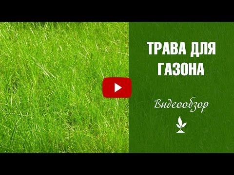 Травы для газона – какие выбрать описание и советы агронома