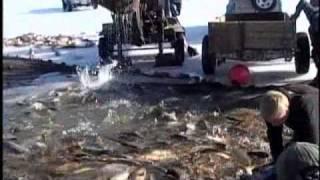 Utah Lake-Carp Removal