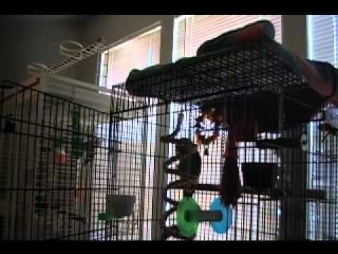 ORIGINAL Parrot Sings Let the Bodies Hit the Floor