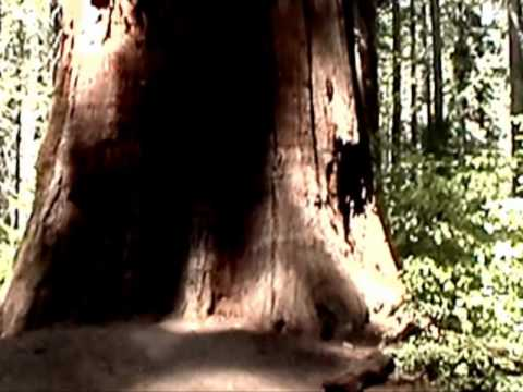 Calaveras Big Trees State Park, California