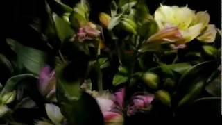 Watch Radiohead Last Flowers video
