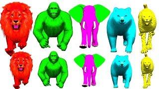 finger family nursery rhymes songs for kids | wild animals for kids,gorilla,dinosaurs,NASH TOON Tv