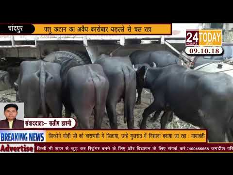 24hrstoday Breaking News:-पशु कटान का अवैध कारोबार धड़ल्ले से चल रहा Report by Saleem Hashmi