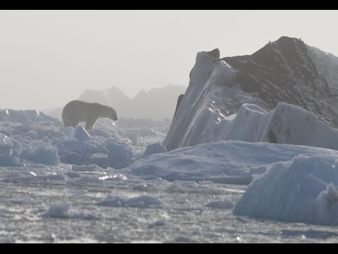Polar Bear and Glaciers in the Canadian High Arctic