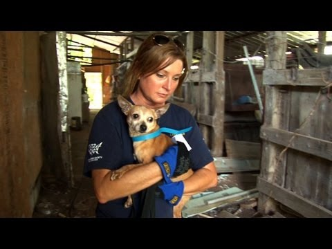 Mississippi Puppy Mill a Living Horror