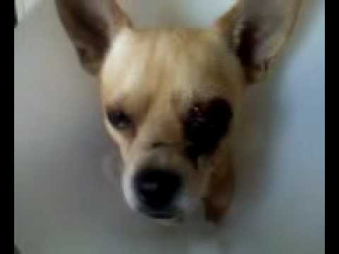 Dog Bites Womans Head Off video