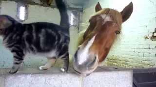 馬と猫って相性抜群!?嫉妬するくらい仲良し♪