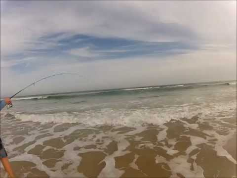 Surf Fishing for Big Whiting and Pompano