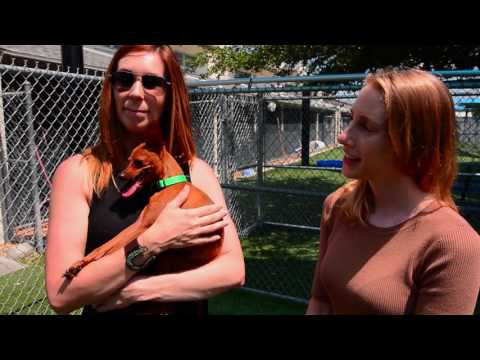 Orange County Animal Services Adoption Challenge