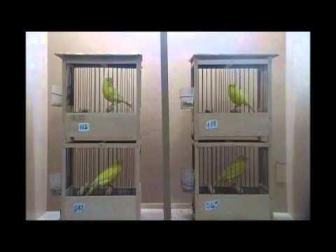 H�seyin EMER 162-083-118-045  2012