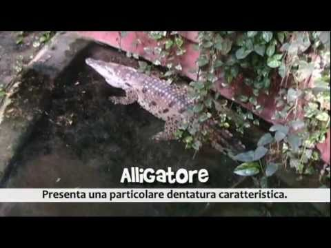 Un Pomeriggio al Bioparco (2007) – Documentario amatoriale – Parte 3di3