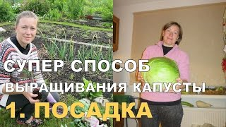 СУПЕР КАПУСТА на спанбонде. ПОСАДКА / Growing Cabbage on Spunbond. 1