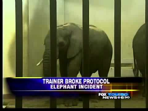 Zoo: RedFox violated elephant protocol