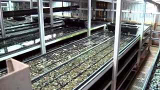 Aquaculture - Northland, New Zealand