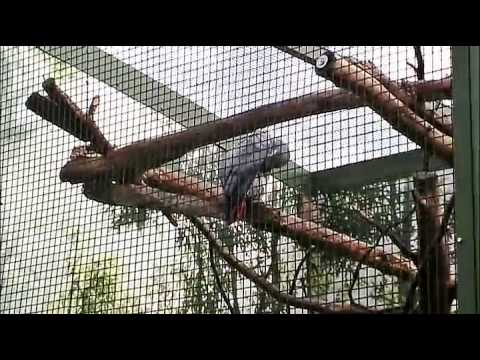 Auf grosser Tour durch den Koelner Zoo 4