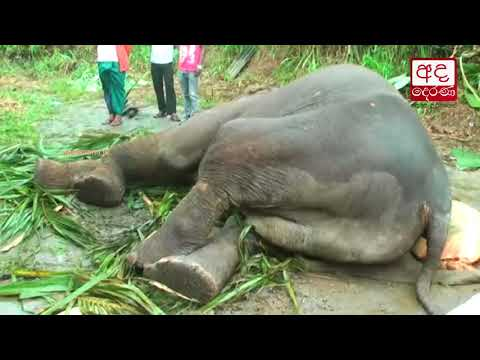 elephant sustains in|eng