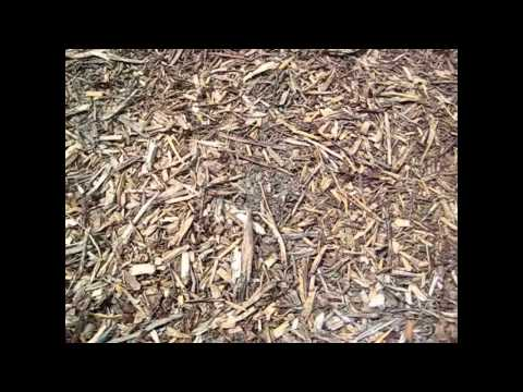 How fast do Woodchips Decompose ?