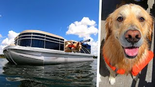 CUSTOM BOAT UPGRADE FOR DOGS! - Super Cooper Sunday #205