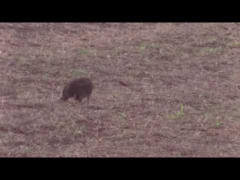 jagd in deutschland. KRANKER FRISCLING GESCHOSSEN Ivo the hunter