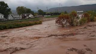 Flash Flooding in & near Williamsport, PA (Lycoming County) - 1 minute - 10-21-2016