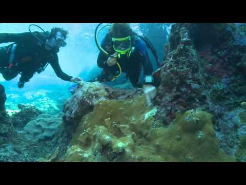 Coral Reefs For Dummies: Underwater Coral Reef Lesson with Mike Trimble and Dr. Andy Bruckner