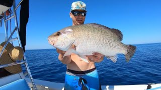 GIANT Mangrove Snapper - Catch And Cook - (Best Recipe) I Can't Believe This Happened! PART 1