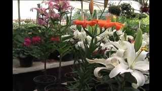 Más Verde: Plantas representativas de México