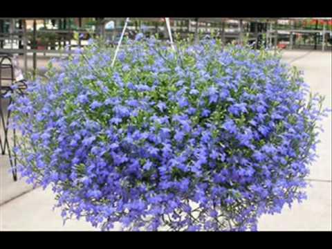 cestas de flores colgantes youtube