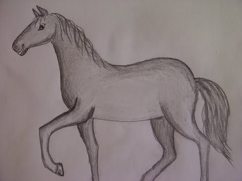 Видео как нарисовать маленькую лошадь