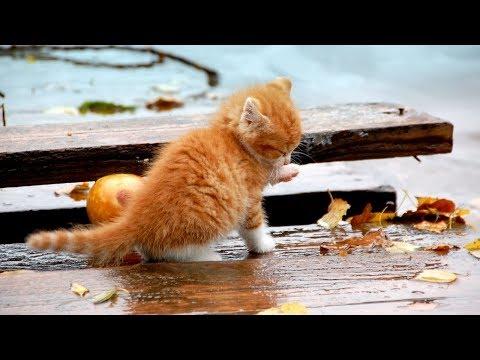 Грустная история про котика и собаку! До слез! Дружба кота и собаки.