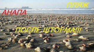 Анапа.Пляж ЧЕРНОГО МОРЯ! ПОСЛЕ ШТОРМА,РАПАНОВ ВЫНЕСЛО НА БЕРЕГ!ГУЛЯЕМ И СОБИРАЕМ РАПАНОВ!