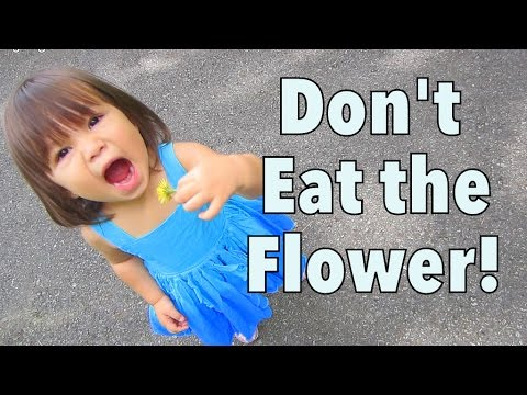 DON'T EAT THE FLOWER! - July 25, 2014 - itsJudysLife Daily Vlog