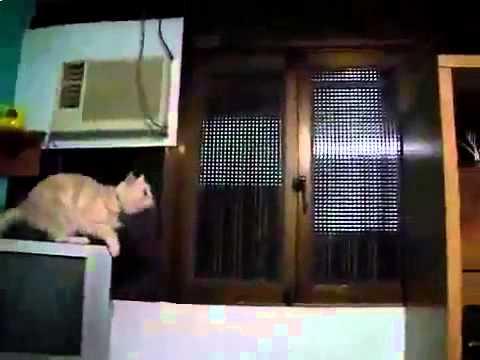 Кошка ударилась головой flv Юмор! Прикол! Смех