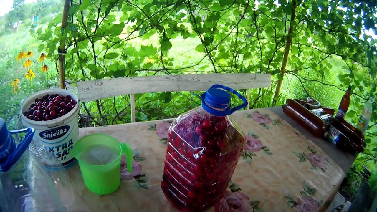 Как сделать вино на вишне просто и дома