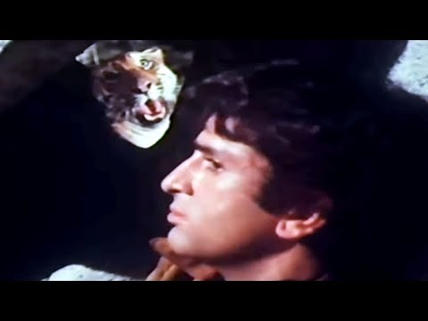 Shashi Kapoor Jaanwar Aur Insaan - Scene 315