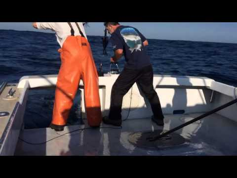 Stumer Bluefin Tuna 9/21/14