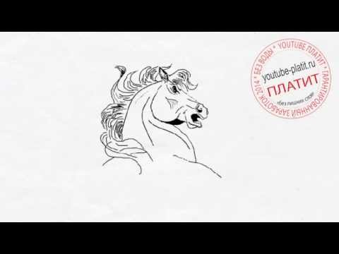 Видео как нарисовать голову лошади карандашом поэтапно