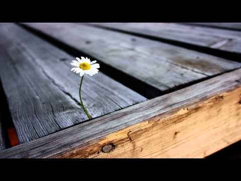 Mossy - Growing Flowers (Original Mix)