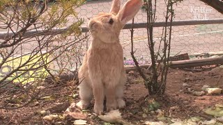 Who's Behind The Mysterious Deaths Of These Poor Rabbits? | Animal in Crisis EP48