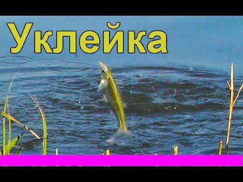 ловля уклейки в мае на поплавочную удочку видео