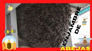 Swarm collection of bees