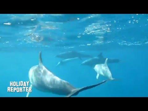Holiday Reporter Auf Delfin - Tour Mit SimSim Reisen TEIL1