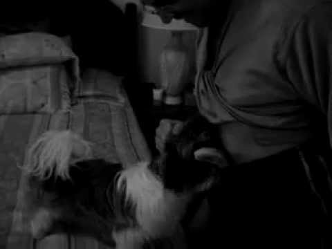 Imagens Chocantes Sexo Com Cachorro video