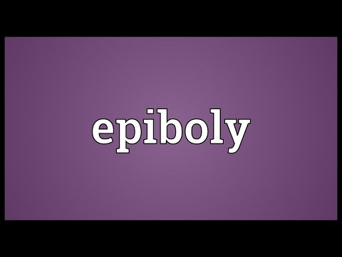 Header of epiboly